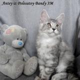 Наш котенок Антей