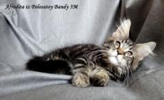 Наш котенок Афродита