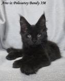 Наш котенок Арес