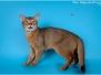 Night Hunter & Fire Cat Larson ABY n